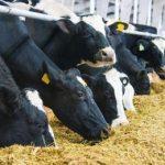 Animal Drug and Supplement Administration Authority Ethiopia Job Vacancy