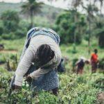 Asela Manufacturing Ethiopia Job Vacancy