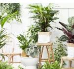 Gulele Plants Center Ethiopia Job Vacancy