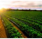 Kulumsa Agricultural Research Center Job Vacancy